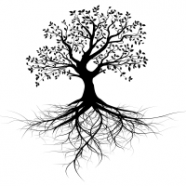 Introducing Roots and Branches